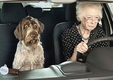 funny-OLD-LADY-DOG-DRIVING